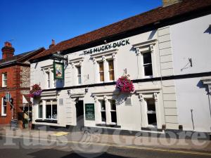 Picture of The Mucky Duck