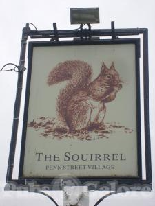 Picture of The Squirrel