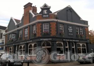 Picture of The Black Dog Beer House