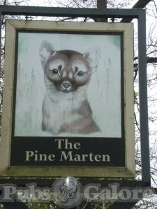 Picture of The Pine Marten